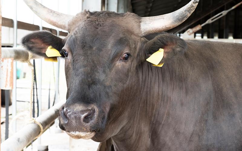 和牛について